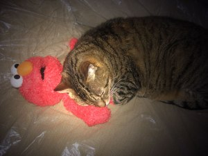 Cat-with-Elmo-Flashlight-web