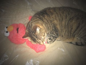 Cat-with-Elmo-Soft-Omni-web
