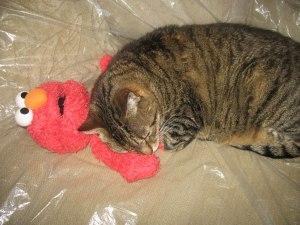 Cat-with-Elmo-web